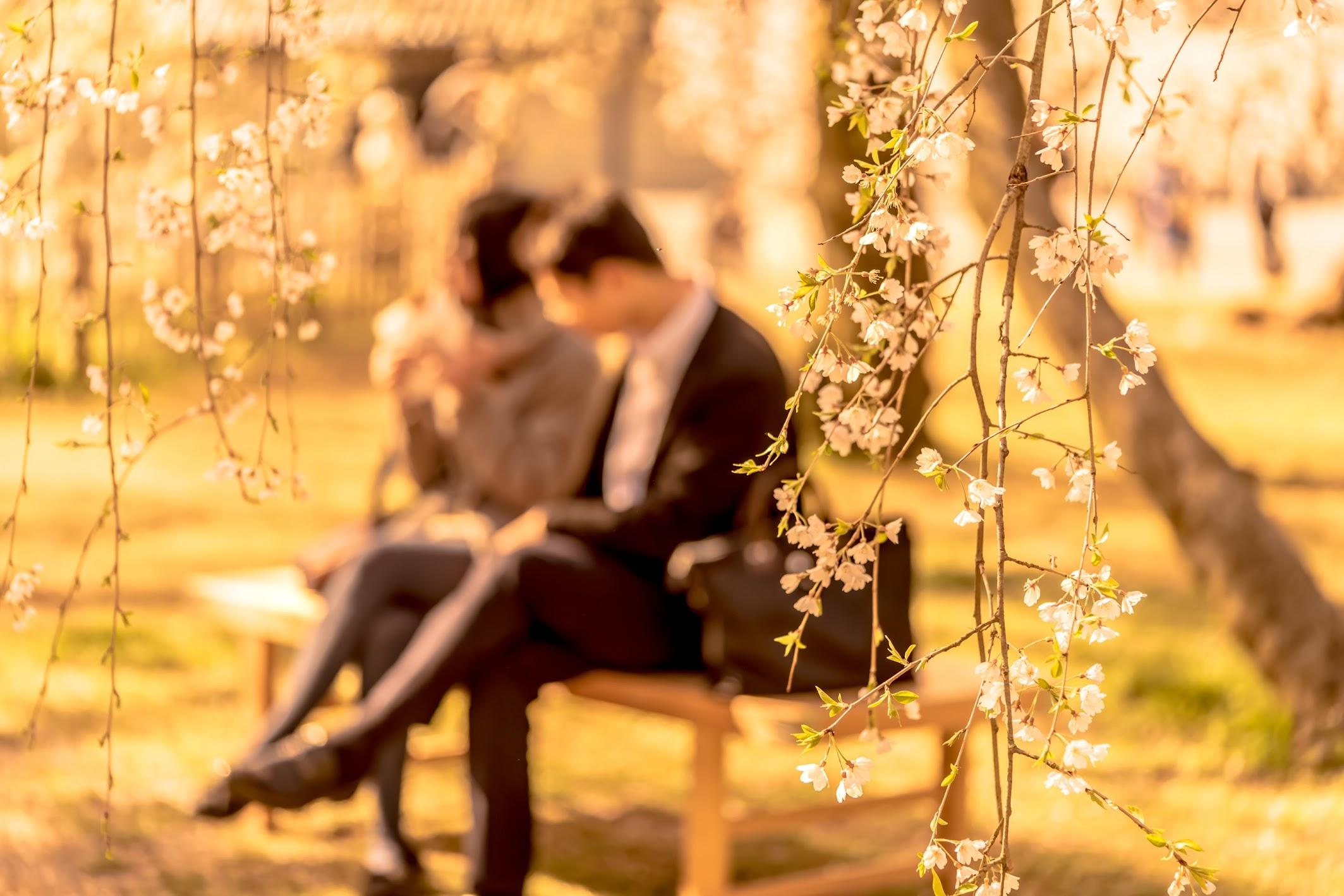 Kyoto gyoen Konoe Mansion site cherry blossoms10