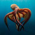 Sea Animals Documentary APK