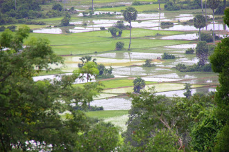 Photo: Year 2 Day 44 -  View of Flooded Fields from Top of Phnom Bakheng