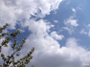 Photo: Virágzó cseresznye ága mellett, a felhős ég színe ragyog.