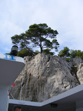 Photo: The second calanque is Port Pin, named for these pine trees that seem to grow right out of the rocks – they need very little soil to survive.