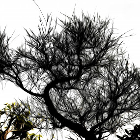 Tree by Soham Banerjee - Abstract Patterns