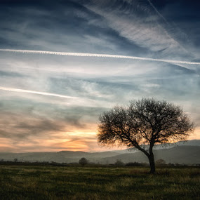 Ragged one by Dejan Ilijic - Landscapes Sunsets & Sunrises ( tree, sunset )