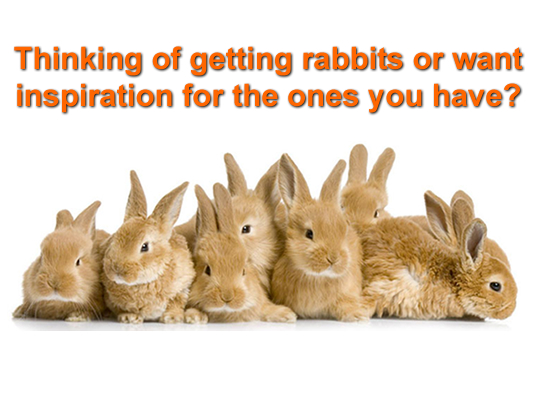 Thinking of Getting Rabbits?