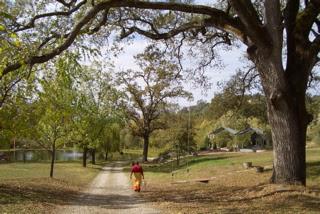Photo: Yoga Farm, Grass Valley, CA - Old oak tree