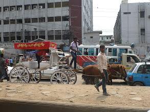 Photo: Na silnicích potkáte nejen koně, krávy, buvoly, kozy, slepice a další domácí zvířata, ale také slony.