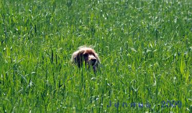 Photo: Maya im grünen Gras