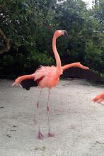 Photo: Flamingo at SeaWorld http://ow.ly/caYpY