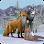WildCraft: Animal Sim Online 3D Spel (APK) gratis nedladdning för Android/PC/Windows