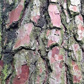 Wood Skin by Meeta Thakur - Nature Up Close Trees & Bushes ( nature, wood, mobile photos, woodland, skin )