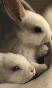 Cute Rabbit Wallpapers screenshot 1