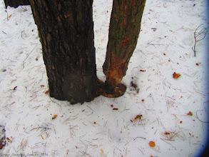 Photo: Проделки бобров