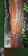 Photo: Pannello albero