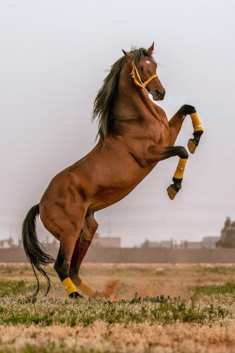 Horsepower by Walid Shahin - Animals Horses ( horse, riding, power, ride, bull, horses )