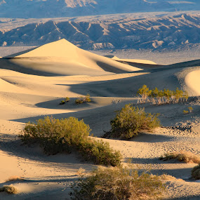 In the Dunes by Randi Hodson - Landscapes Deserts ( sand, mountains, dunes, desert, shadows,  )