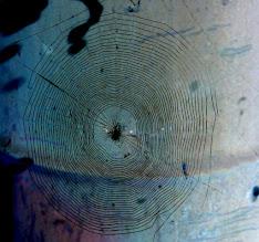 Photo: Toile de l'épeire diadème - Photo solarisée.