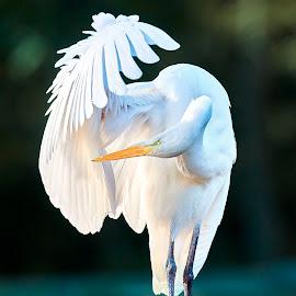 Bird 581~Q by Raphael RaCcoon - Animals Birds