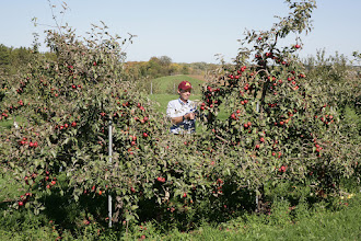 """Photo: David Bedford and 'Frostbite' (TM) apple developed by him, at the University of Minnesota and released by the U of MN Agricultural Experiment Station in 2008. Ripens first week of October in Minnesota.  Extremely cold hardy, survives in USDA zone 3A. Minnesota Agricultural Experiment Station project #21-016, """"Breeding and Genetics of Fruit Crops for Cold Climates,"""" principal investigator: James J. Luby.  David Bedford: scientist, apple breeder."""