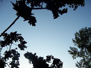 Photo: Leaves against a blue sky