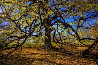 Photo: Tree of Life - Monticello, VA