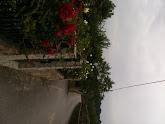 Photo: Roses en route