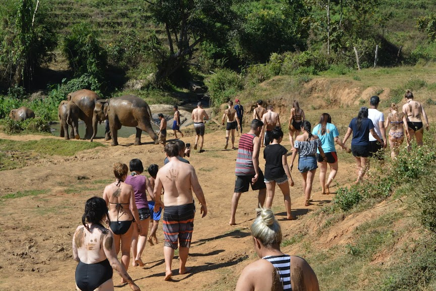 Walk along the river with elephants
