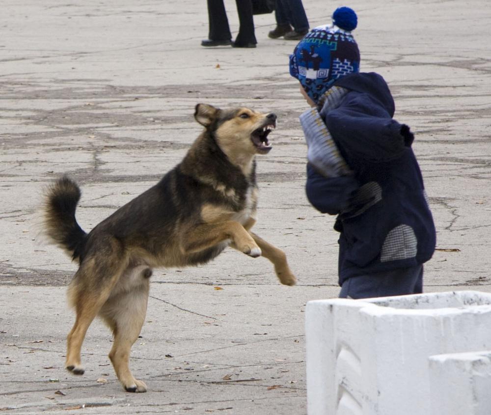 Собаки могут спонтанно нападать на человека