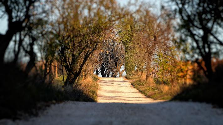 Camminando sui Colli Euganei di albertoschiavoimmagini