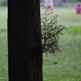 The subtle art of peek-a-boo-ing. by Nishtha C - City,  Street & Park  City Parks ( #peekaboo, #trees, #greenery, #park, #focus )
