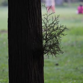 The subtle art of peek-a-boo-ing. by Nishtha C - City,  Street & Park  City Parks ( #peekaboo, #trees, #greenery, #park, #focus )