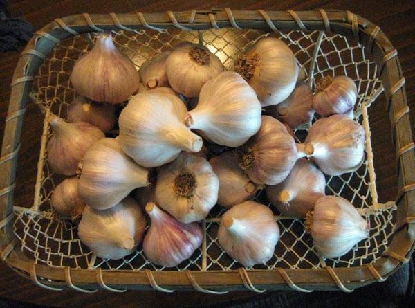 Garlic From My Garden Recipe