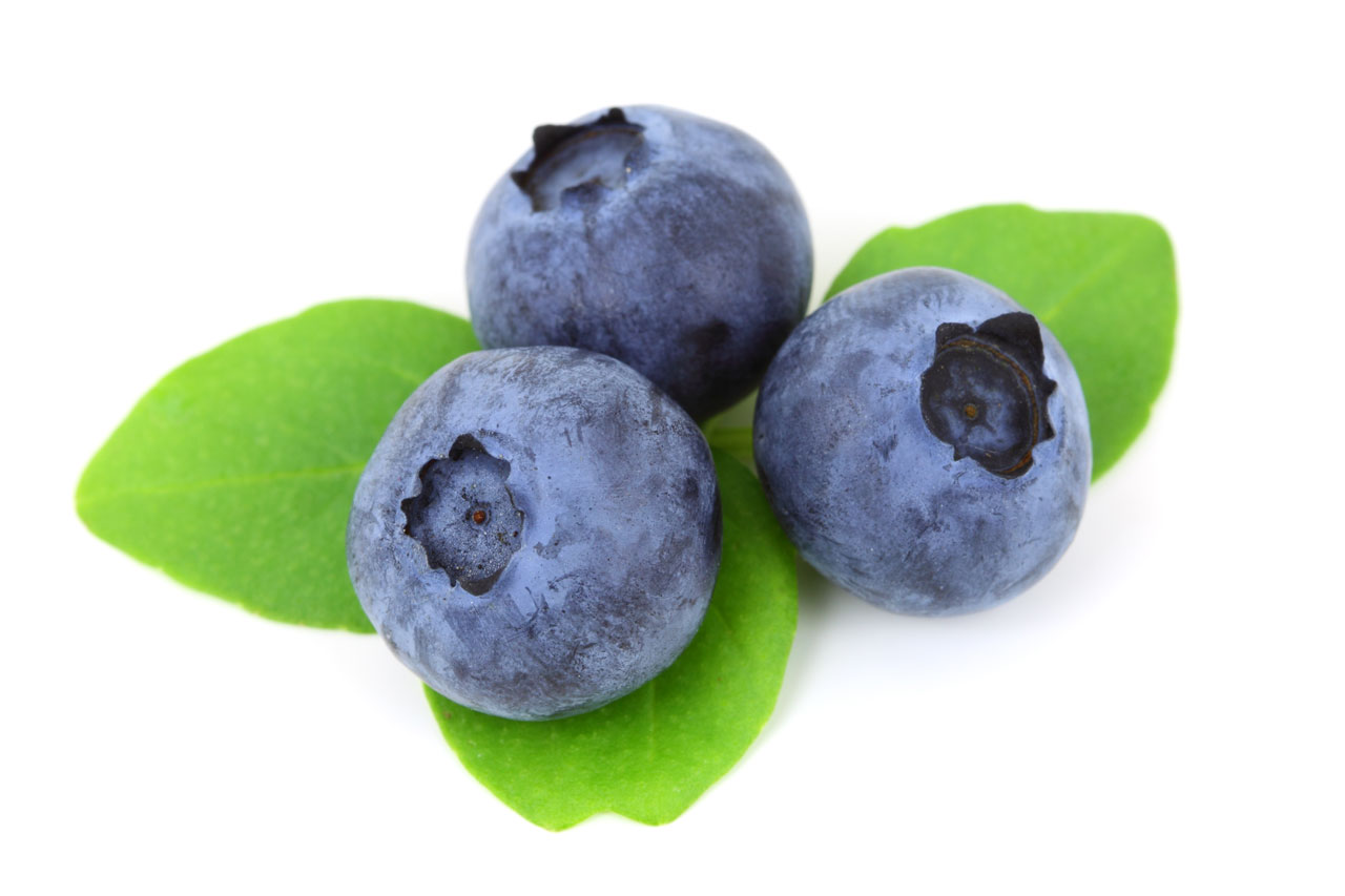 Blueberry Free Stock Photo - Public Domain Pictures