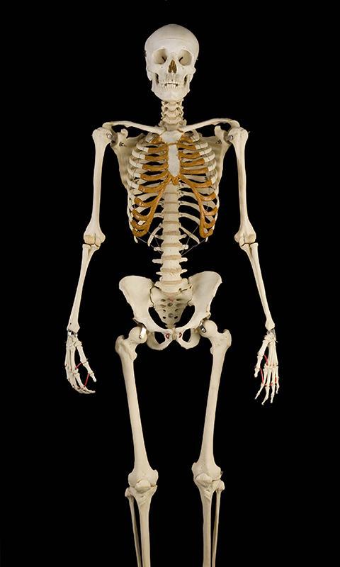 говорит картинки какие бывают скелеты фоне