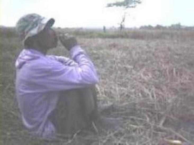 Hama wereng di Ngawi kian meluas