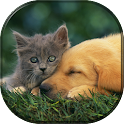 Pets & Animals Wallpapers FREE icon