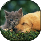 Pets & Animals Wallpapers FREE
