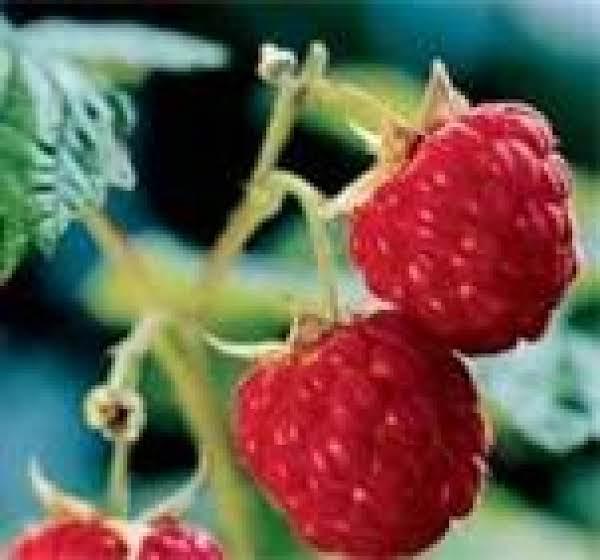 Red Raspberry Liqueur