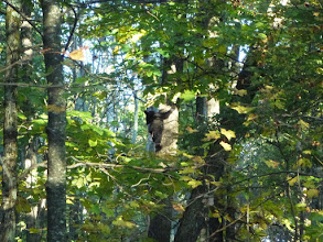 Photo: Bear in Shenandoah National Park