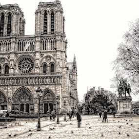 """Love is like a tree: it grows by itself, roots itself deeply in our being and continues to flourish over a heart in ruin. The inexplicable fact is that the blinder it is, the more tenacious it is. It is never stronger than when it is completely unreasonable.""""  ― Victor Hugo, The Hunchback of Notre-Dame by Monique Sjarief - Buildings & Architecture Public & Historical"""