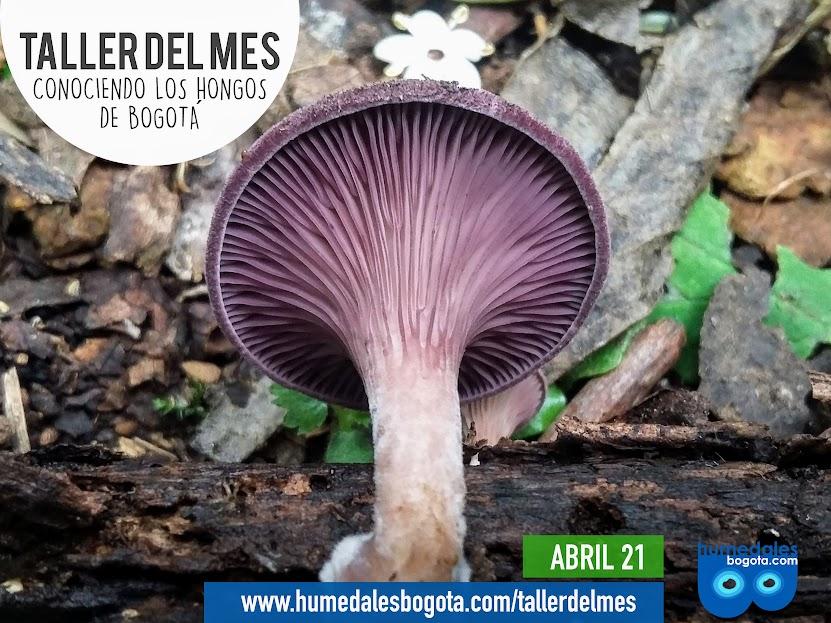 Taller conociendo los hongos de Bogotá