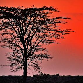 Tramonto by Vito Masotino - Landscapes Sunsets & Sunrises ( controluve, trees, travel, sunrise, africa,  )