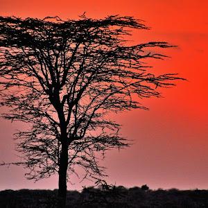 Etiopia_Kenya_1985_HDR.jpg