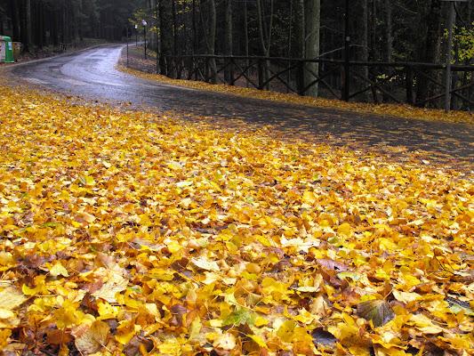 THE YELLOW ROAD di Chanti