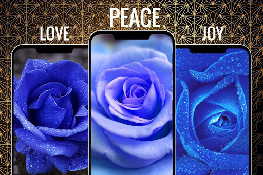 Blue Rose Flower Wallpapers Hd Backgrounds Download Apk Free For Android Apktume Com
