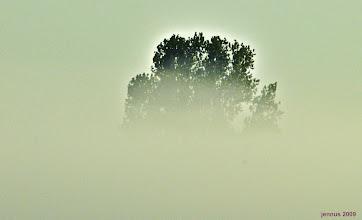 Photo: Nebel