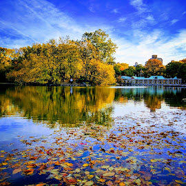 Central Park Fall Foliage by Souvik Roy - Instagram & Mobile Android