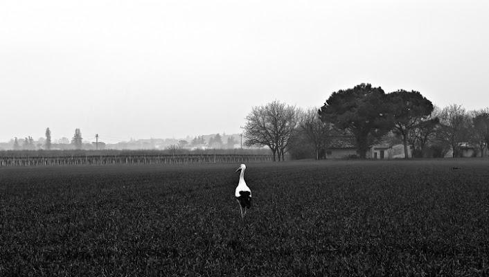 La cicogna di babi83