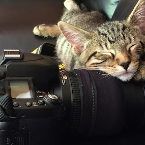 Sleeping kitten. by Viana Santoni-Oliver - Instagram & Mobile iPhone ( kitten, cat, male, camera, nikkor, domestic shorthair, sleeping, lens, mammal, dslr, magazine, couch, pet, nikon, leather, black, animal,  )