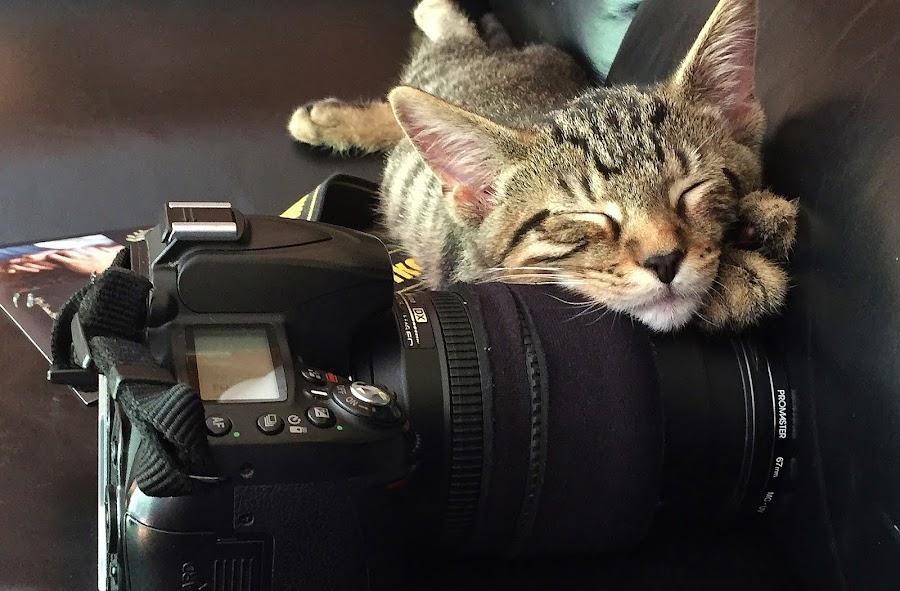 Sleeping kitten. by Viana Santoni-Oliver - Instagram & Mobile iPhone ( kitten, cat, male, camera, nikkor, domestic shorthair, sleeping, lens, mammal, dslr, magazine, couch, pet, nikon, leather, black, animal,  )