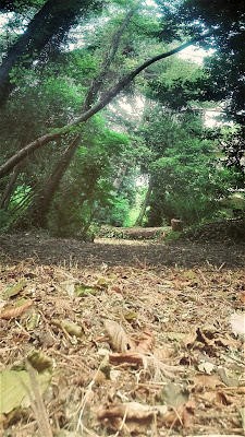 La via selvatica...X di BNNRRB